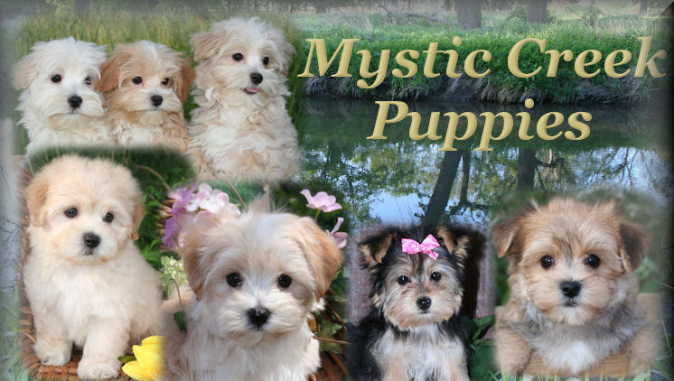 Customer Comments about Mystic Creek Puppies